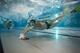 Galeria Sekcja hokeja podwodnego